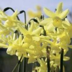 Foto: Narcis 'Hawera'